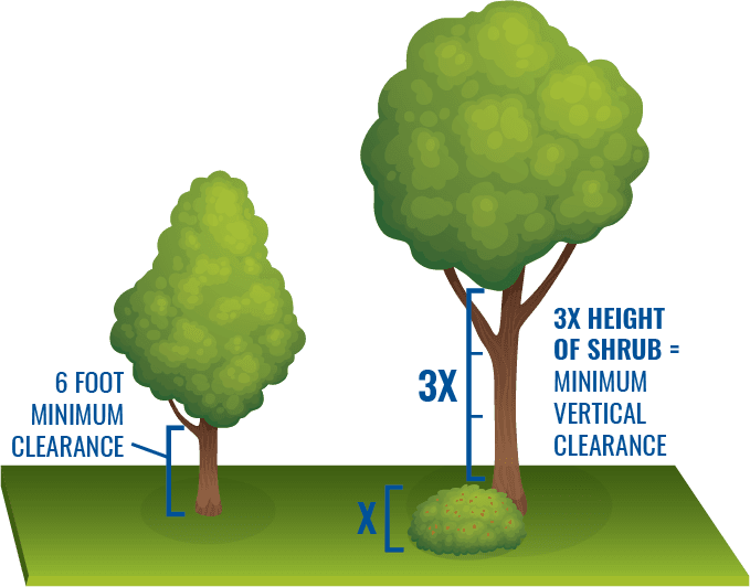 Image showing vertical clearance needed between ground and tree branches (6 feet), and between top o